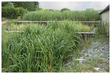 About Reed-beds - by Cress Water Solutions