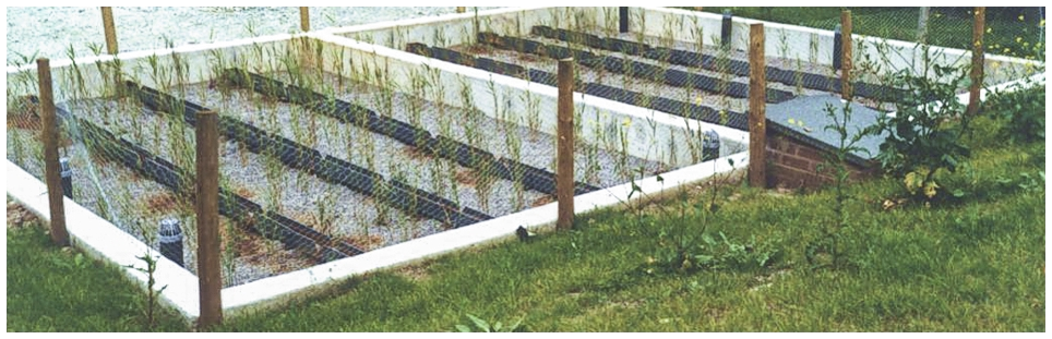 Reed-beds ponds and wetlands - by Cress Water Solutions