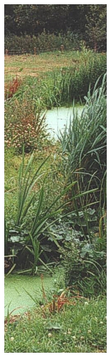 reed-bed problem solving - by Cress Water Solutions