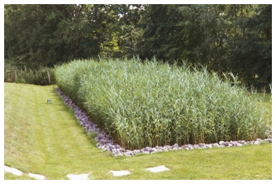3 Stage Combination Reed-bed Case Study - by Cress Water Solution