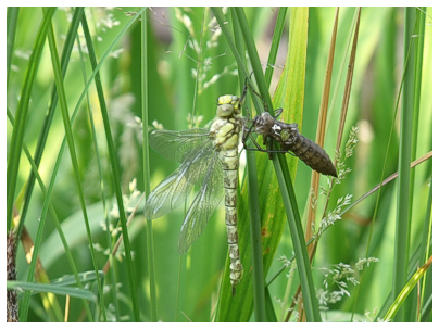 The reed bed environment - solutions by Cress Water Solutions